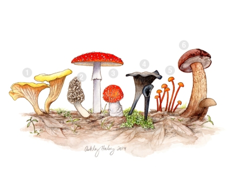 AHalsey_mushrooms4