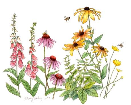 honey bee flowers_lorez_ahalsey.jpg